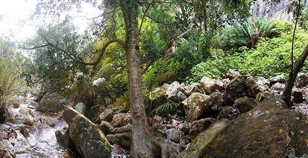 Gallery – Woods